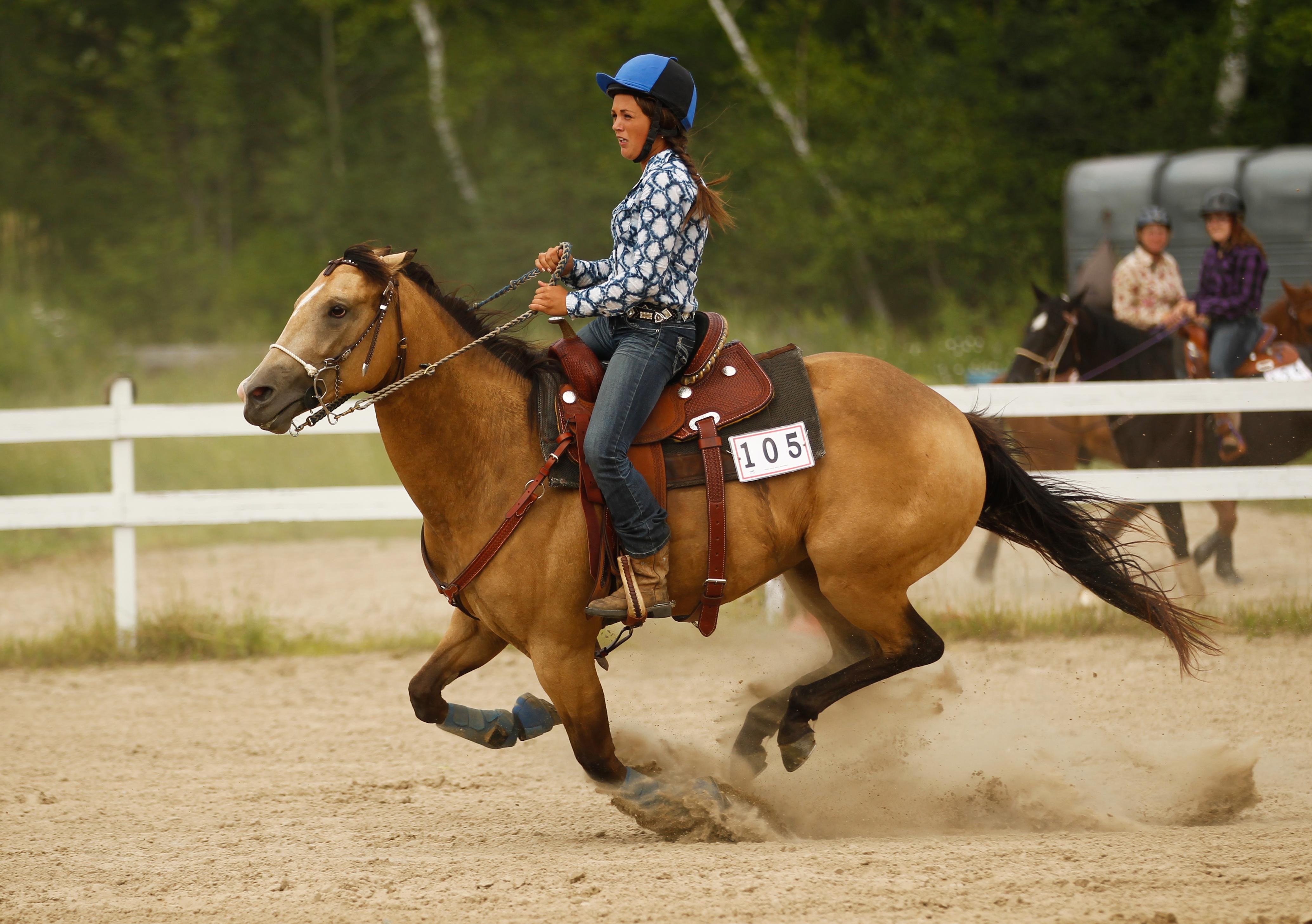 Самые быстрые породы лошадей в мире: английские чистокровные скакуны, кони-рекордсмены