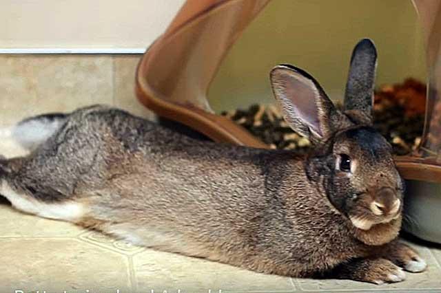 Ринит у кроликов: основные симптомы и лечение