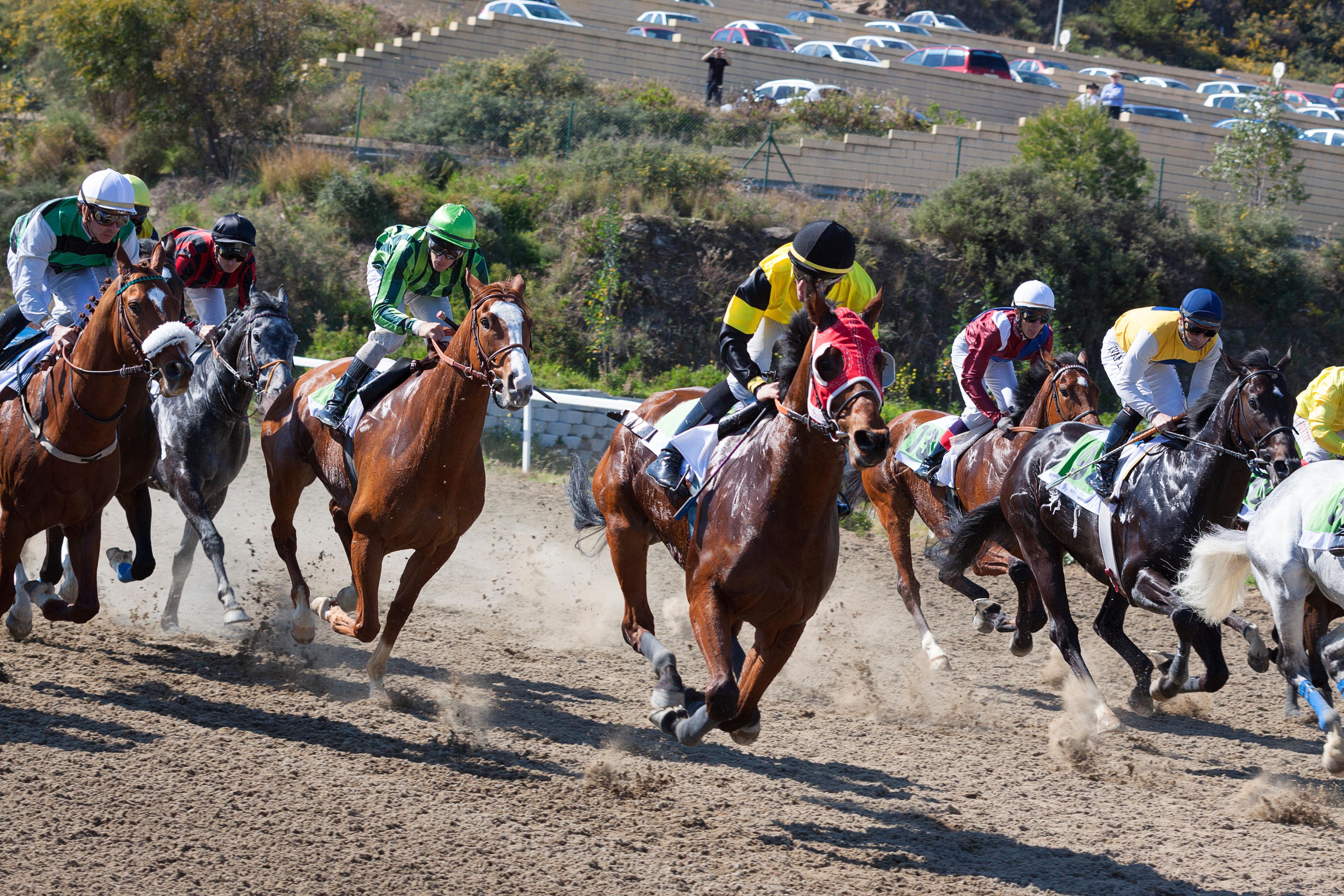 Конный спорт: виды, что это такое, список олимпийских и неолимпийских дисциплин, разновидности, троеборье, конкур, вестерн
