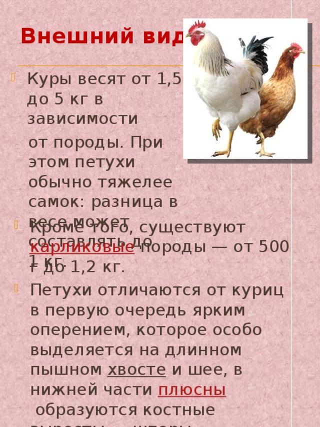 Как определить возраст курицы несушки 6 способов!