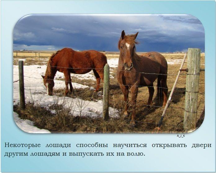 Мини лошади (карликовые, миниатюрные): описание пород, фото, характеристики
