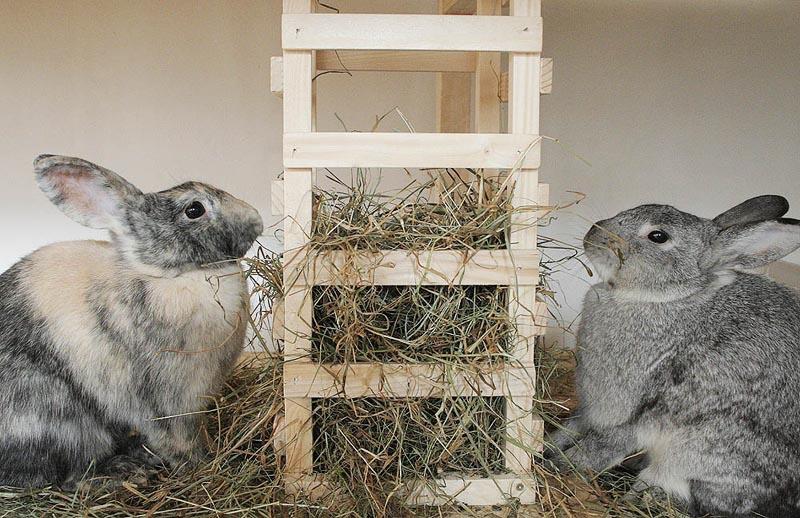 Как выкормить крольчат без крольчихи: чем кормить, сколько раз