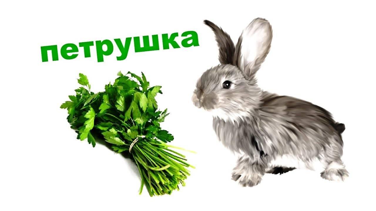 Можно ли давать петрушку кроликам: польза и вред