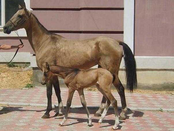 Методы разведения лошадей