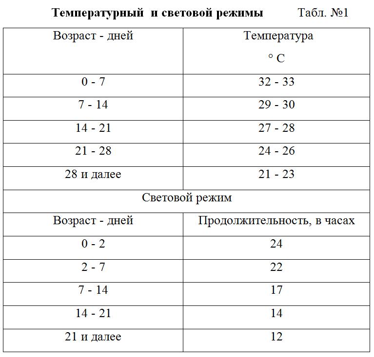 Температурный режим, содержание месячных цыплят, освещение и питание