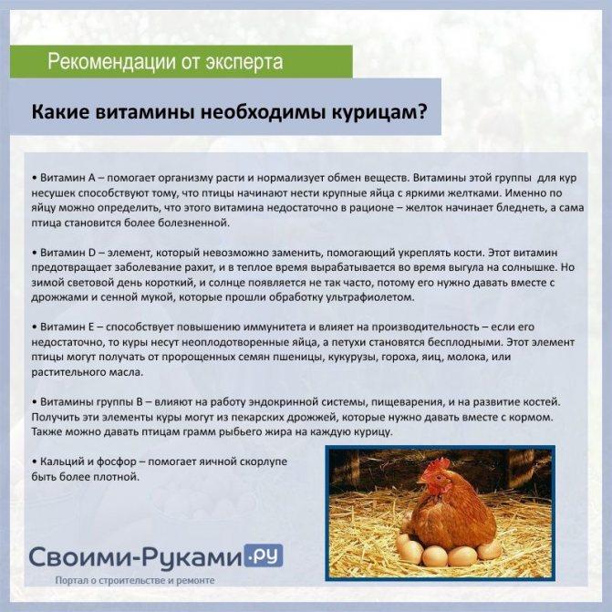 Как определить возраст курицы несушки, отличить старую от молодой