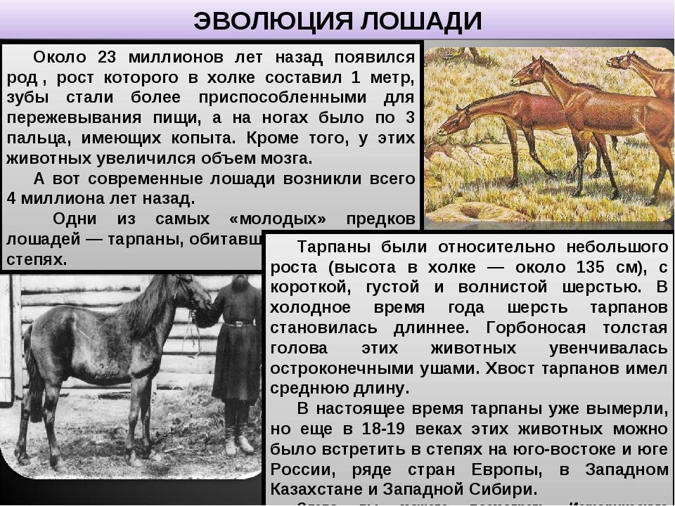 Происхождение и эволюция лошадей. как менялись конечности у лошади