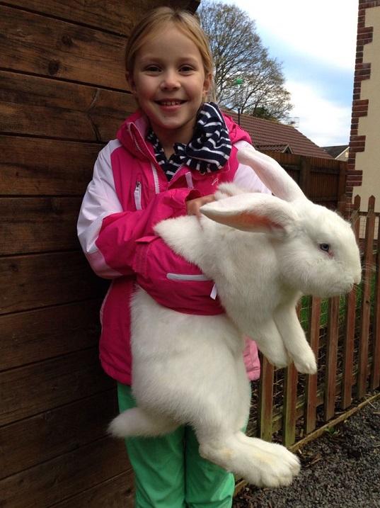 Самый большой кролик в мире, породы гигантских кроликов