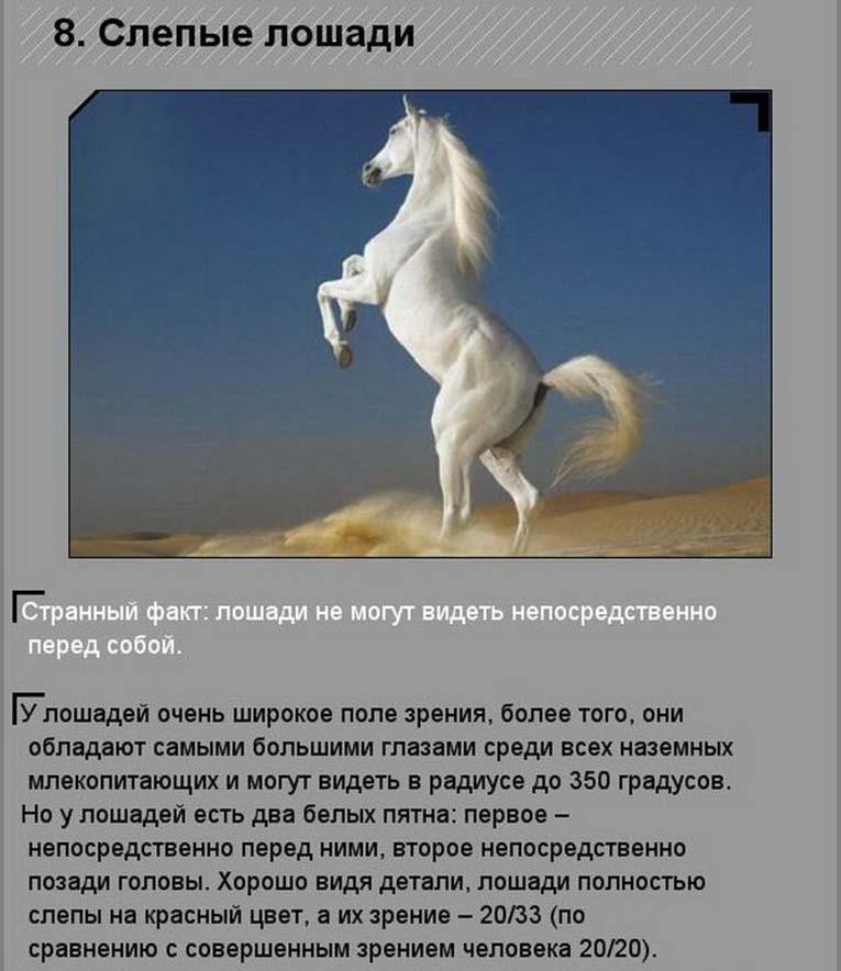 Где водятся дикие лошади в россии