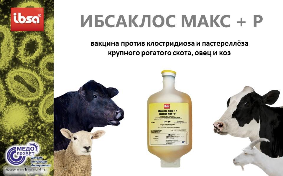 О лейкозе у коров и крупного рогатого скота: чем опасно, можно ли пить молоко