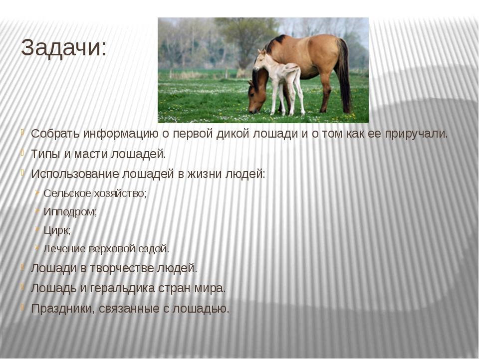 Как ухаживают за лошадьми: правила ухода и содержания домашних лошадей