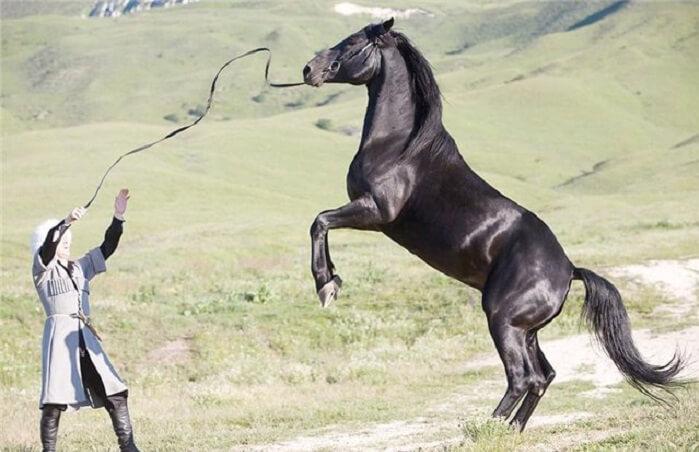 Характеристики карачаевской породы лошадей
