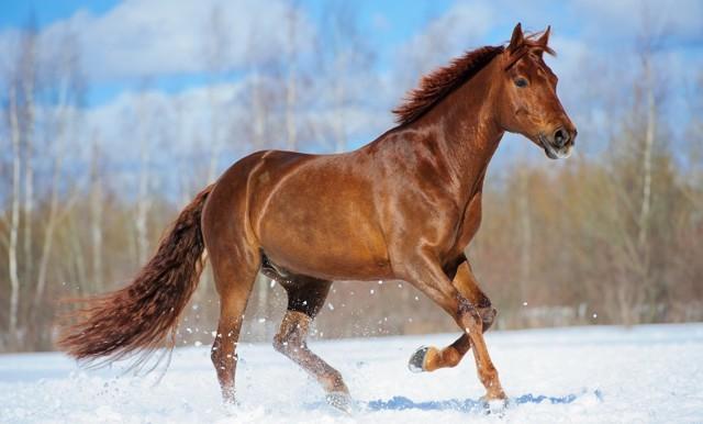 Донские лошади фото и описание