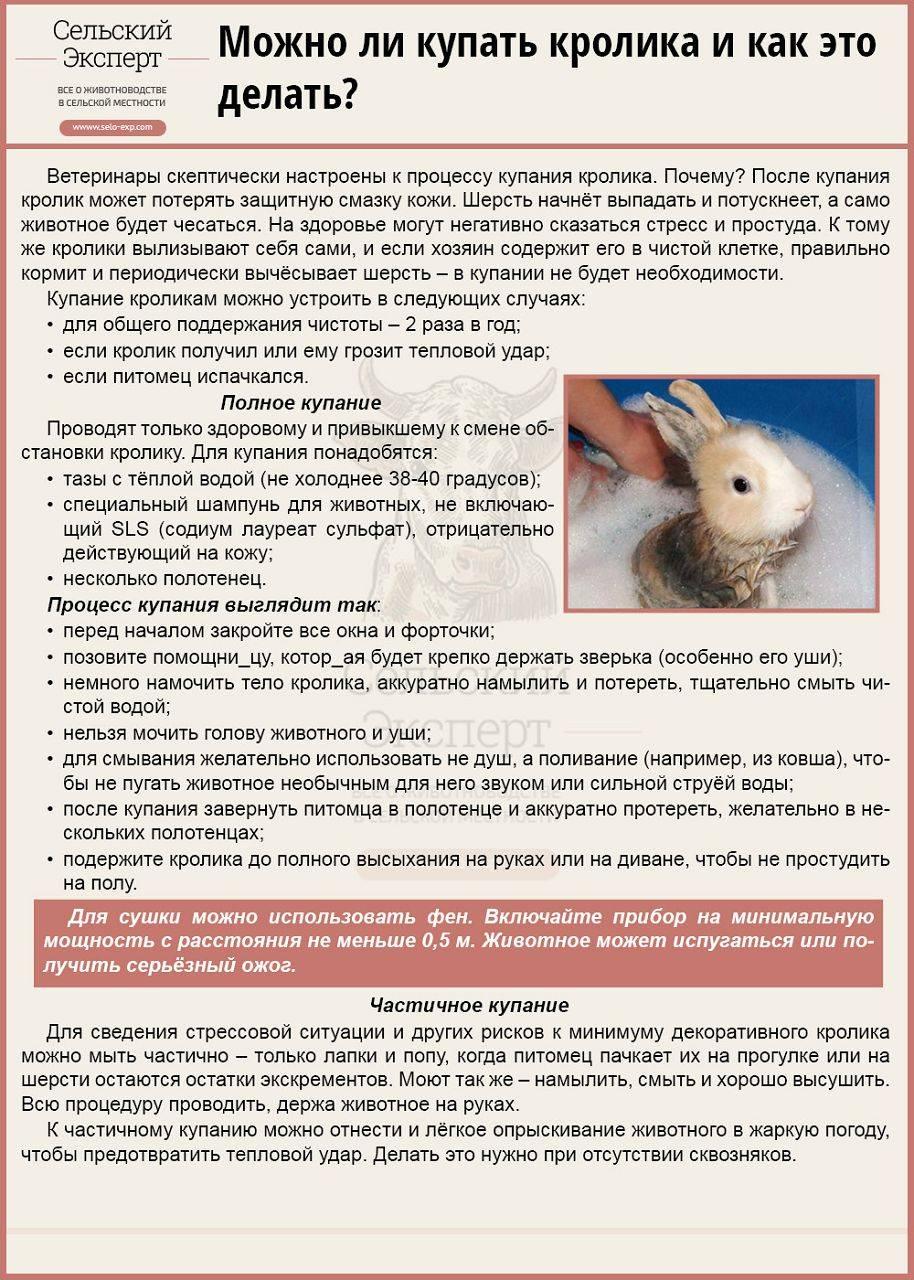 Все о купании декоративных кроликов: можно ли и как помыть в домашних условиях