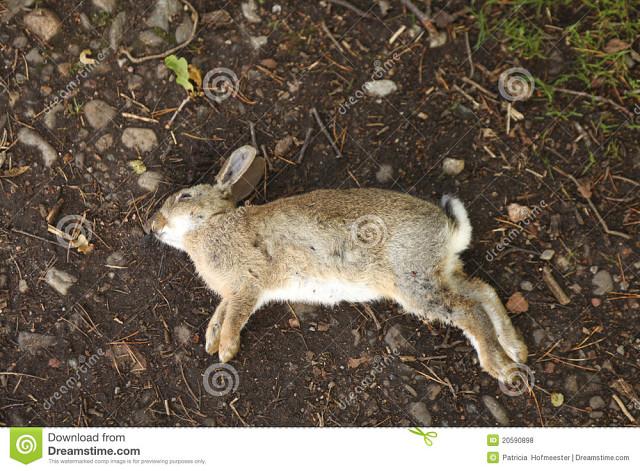 Почему дохнут кролики: от чего и что делать, видео и фото