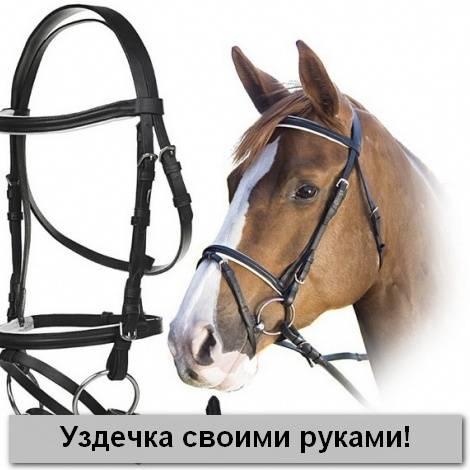 Как сшить недоуздок для лошади?
