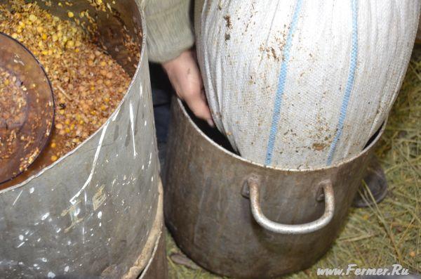 Как проращивать зерно для кур пошагово с фото