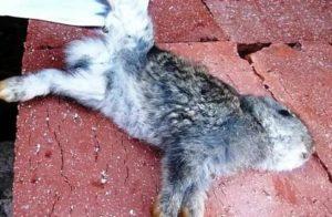 Почему погибают и дохнут кролики: причины