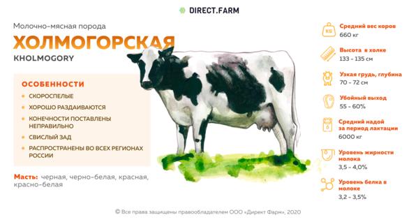 Описание коровы холмогорской породы: особенности содержания и ухода. выращивание коров холмогорской породы