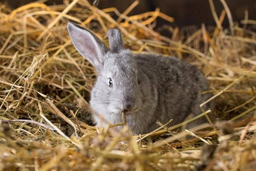 Чем кормить крольчиху после окрола чтобы было больше молока