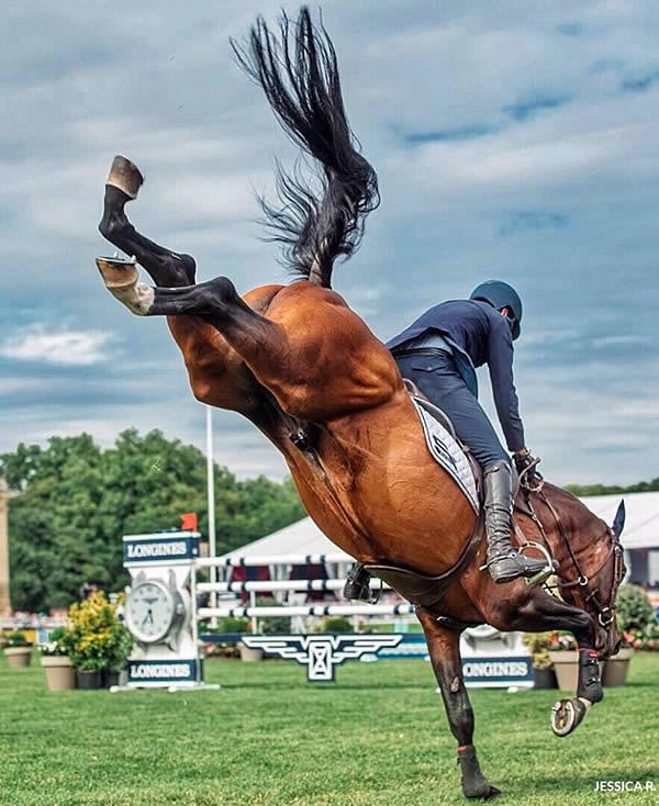 ✅ почему лошадь встает на дыбы, кусается, брыкаться, сбрасывает всадника - tehnomir32.ru
