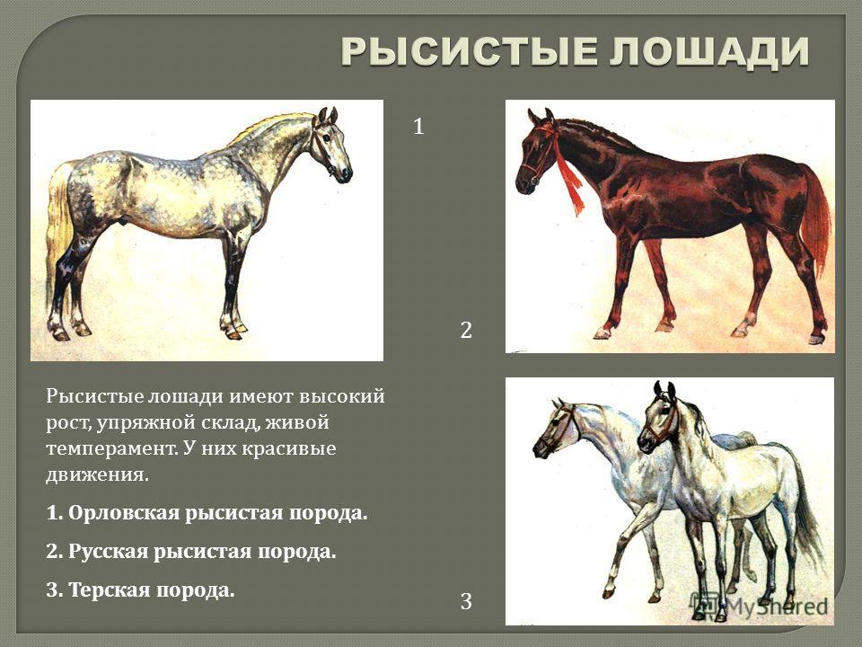 Породы лошадей: 150 фото, названия, описание, особенности и назначение лошади