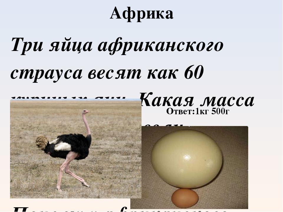 Яйцо страуса: вес страусиного яйца