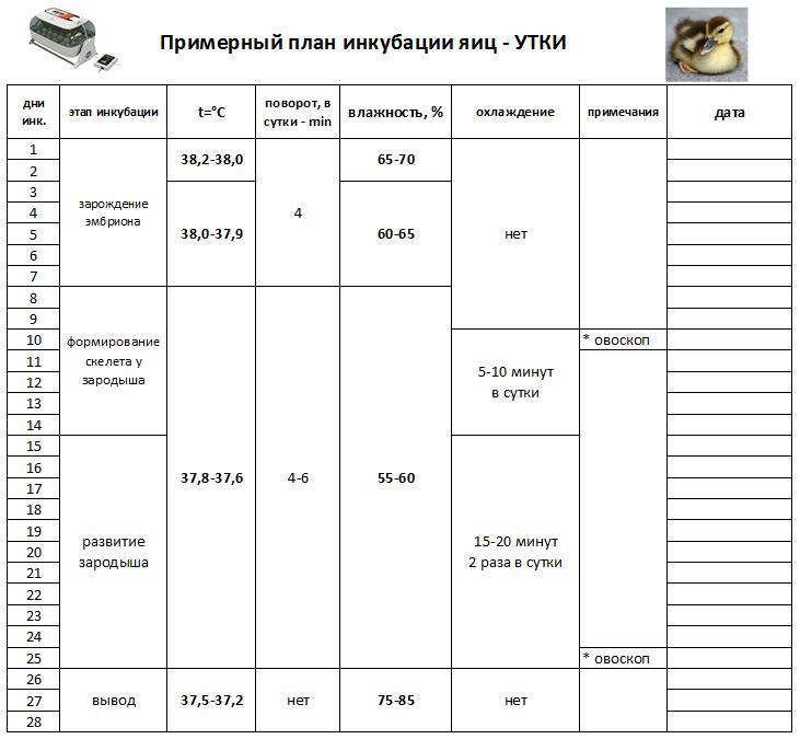 Инкубация цесарок: вывод в инкубаторе, таблица и режим инкубации