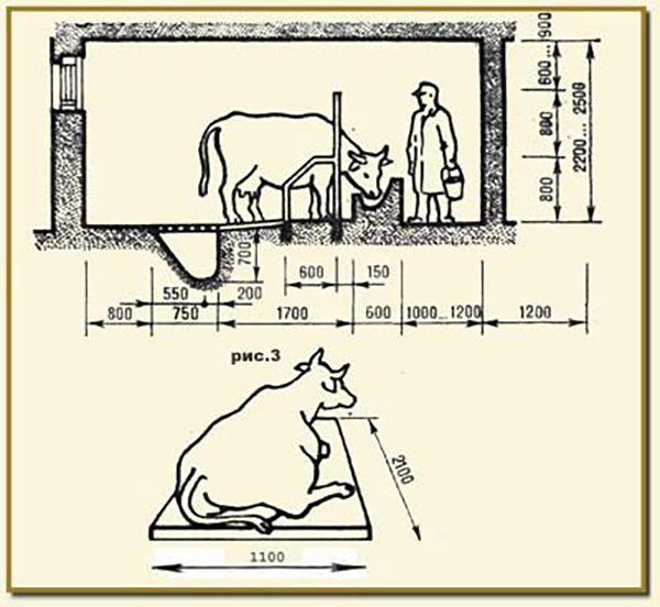 Проектирование коровников: как построить коровник нужного размера своими руками