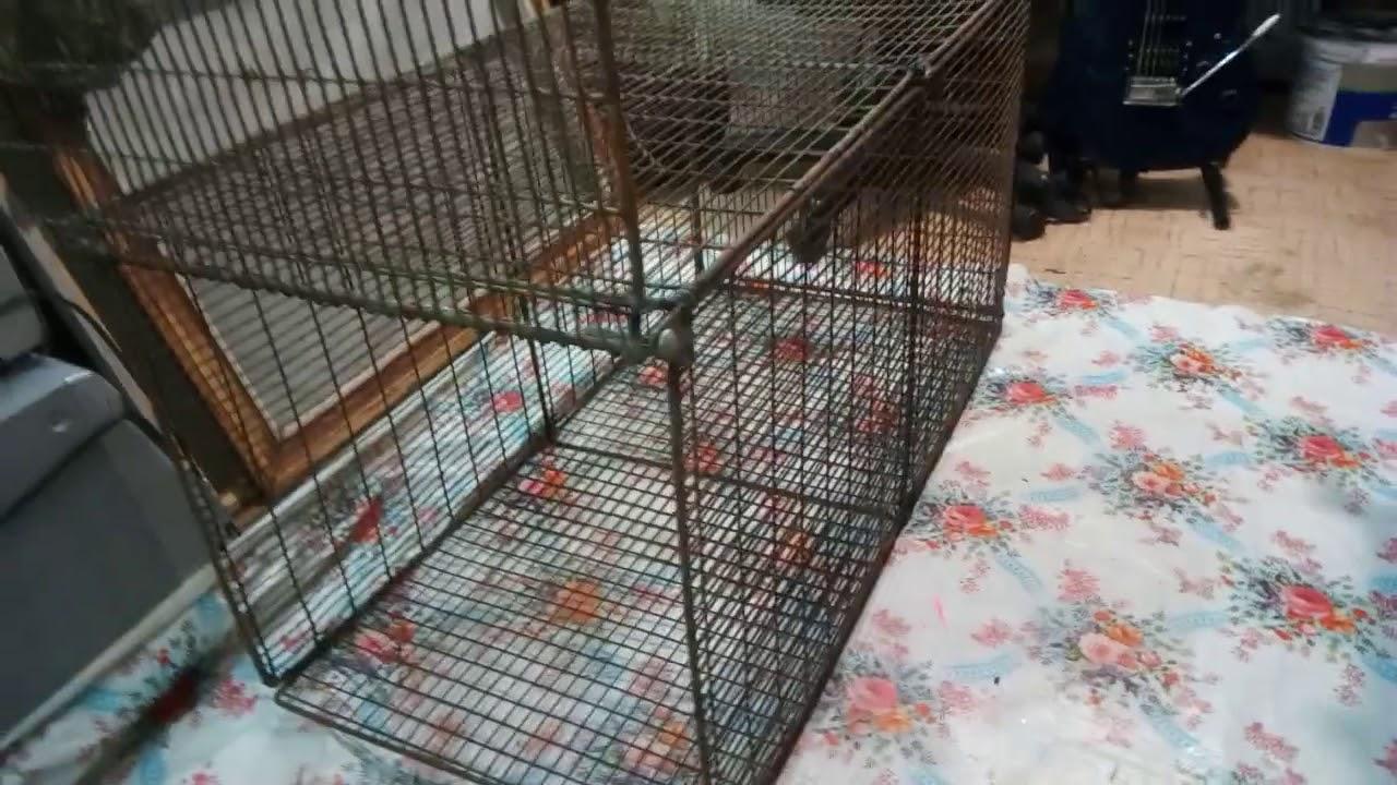 Чертеж ловушки для фазанов | комнатные цветы