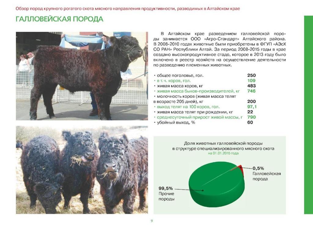 Ярославская порода коров: что из себя представляет, характеристики, уход