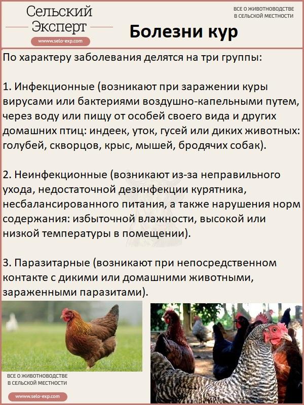 По всему миру загадочным образом гибнут птицы и рыбы. ученые в панике