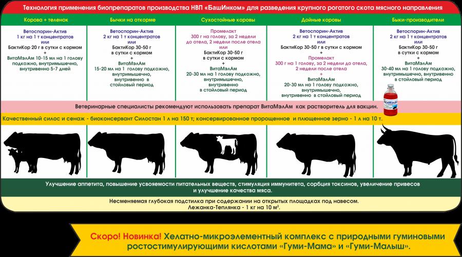 Лептоспироз крс: схема лечение животных, симптомы у коров, правила исследования и диагностики — moloko-chr.ru