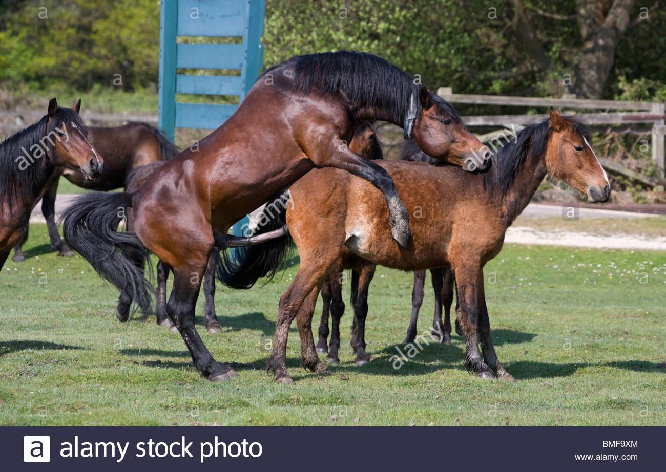 Как происходит спаривание лошадей: методы случки