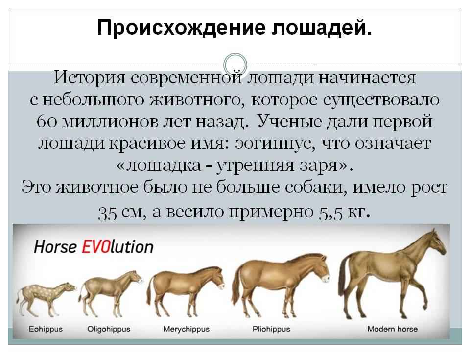 Лошадь: все самое интересное - породы, содержание и уход