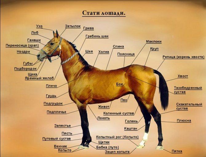 """""""строение лошади"""" - зеленый огород"""