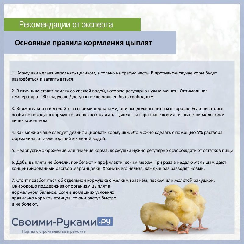 Чем пропоить цыплят для профилактики