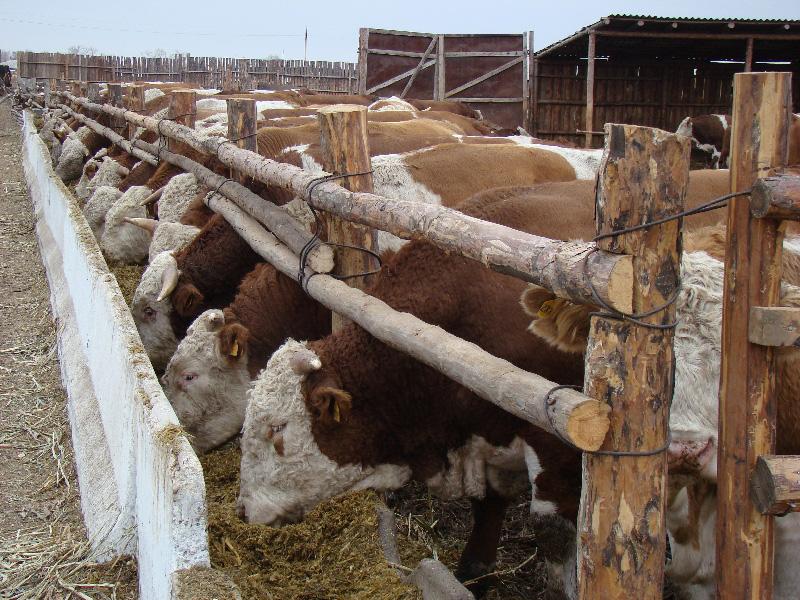 Как построить сарай для быков своими руками — remont-om