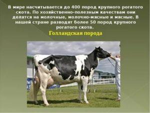 Классификация по виду, возрасту, полу, упитанности убойных животных, тепловому состоянию мяса.