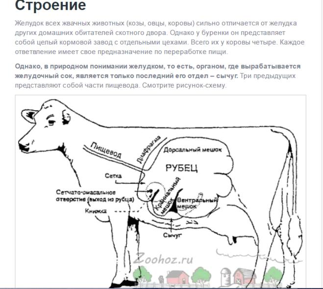 ✅ у коровы нет жвачки лечение народными средствами. что делать, если у коровы пропала жвачка? - cvetochki-ulyanovsk.ru