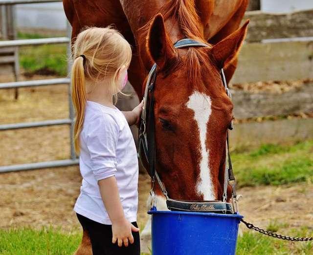 Как ухаживать за лошадью: изучаем тщательно