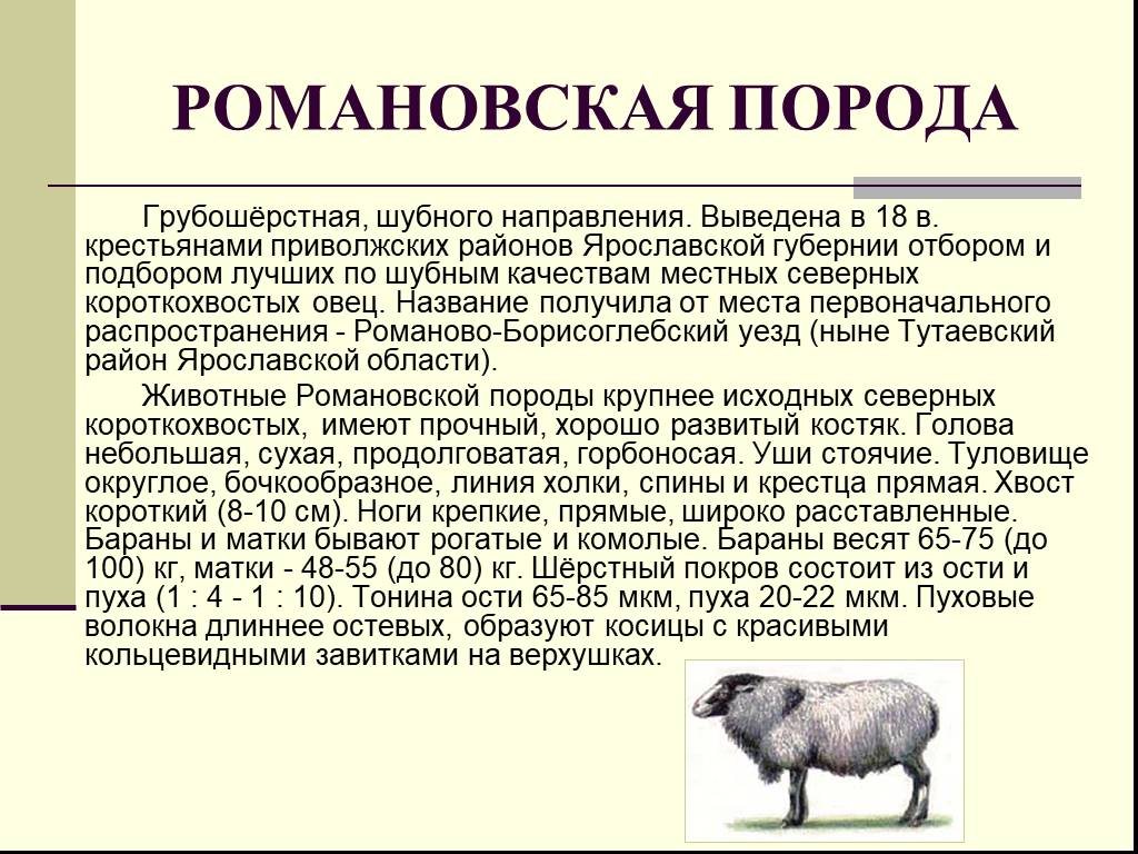 Овцы романовской породы для получения шубного меха и вкусного мяса