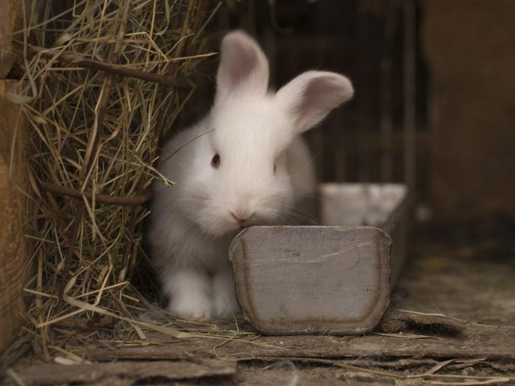 Сколько лет живут домашние декоративные кролики и что необходимо знать для продления срока их жизни?
