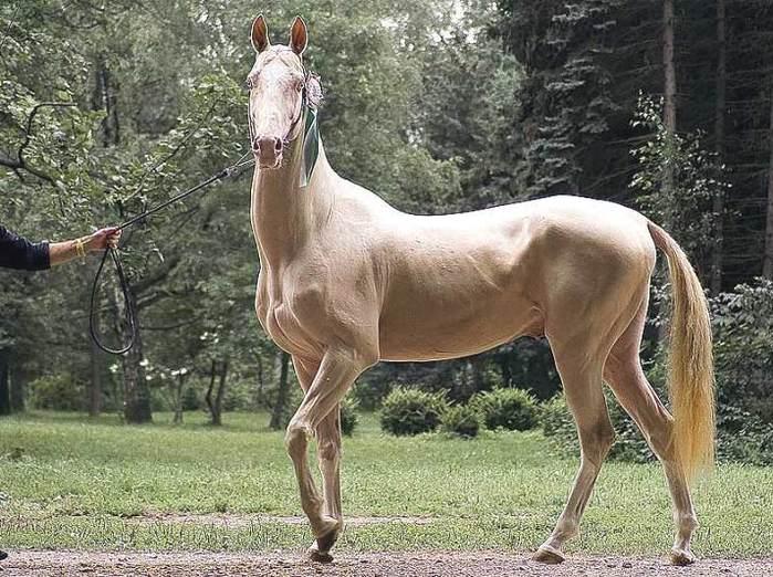 Список самых красивых лошадей в мире с фото и описанием