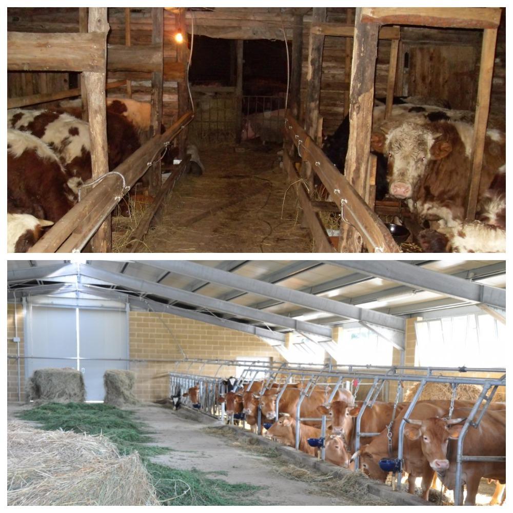 Сарай для быков и коров; стойло, загон, хлев своими руками