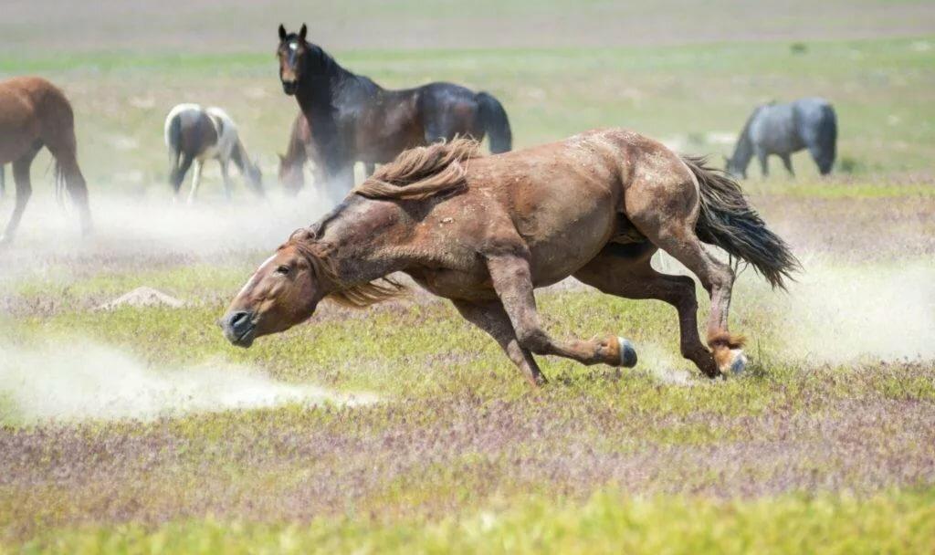 Размножение лошадей – как происходит процесс спаривания и беременность 2020