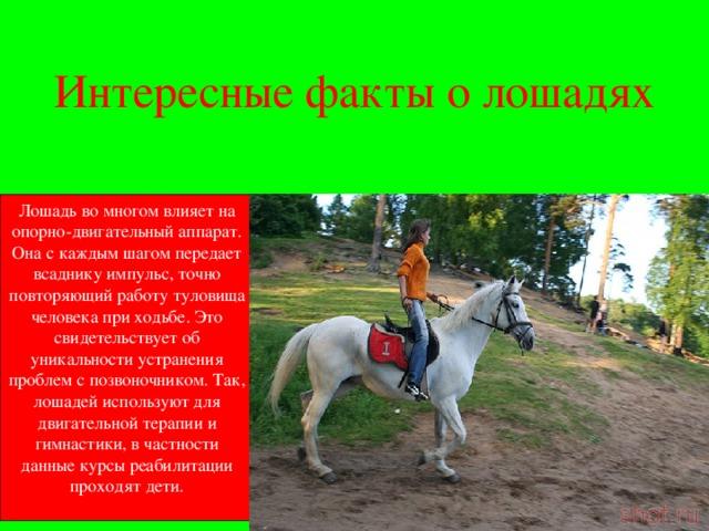 Интересные факты о лошадях: описание