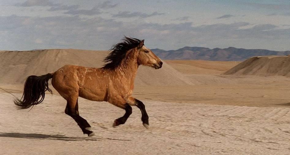 Сонник лошадь кусается лягается. к чему снится лошадь кусается лягается видеть во сне - сонник дома солнца