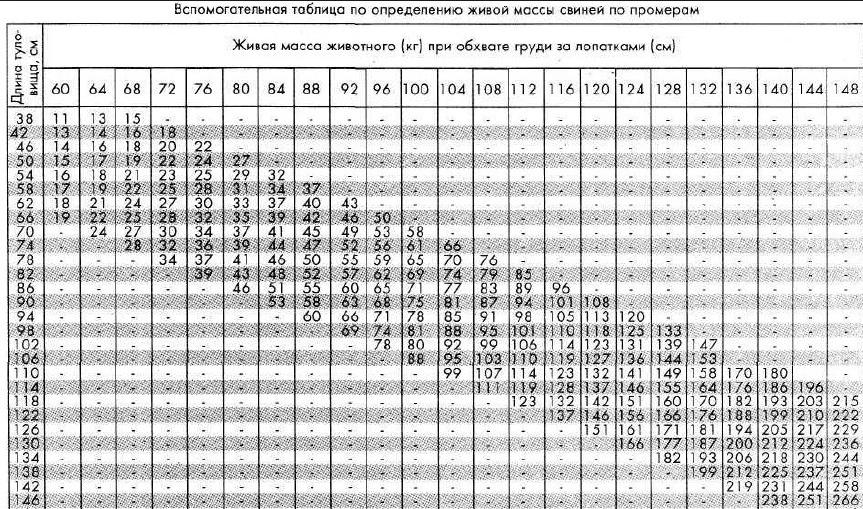 Вес свиньи: таблица по размерам, как определить вес