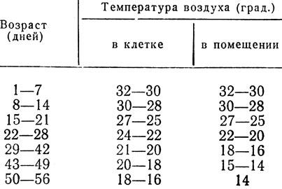 Вес бройлеров по дням: таблица прироста птиц для правильного развития